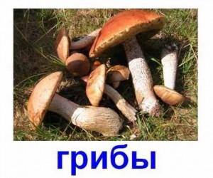 Съедобные грибы. Карточка Домана.