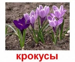 Карточки Домана. Растения. Садовые цветы.