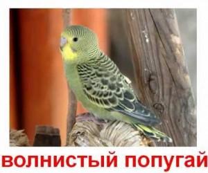 Карточки Домана. Птицы.