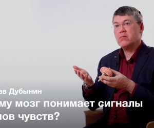 Мозг и сенсорные системы — Вячеслав Дубынин.