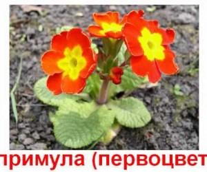 Карточки Домана. Дикорастущие растения. Цветы.