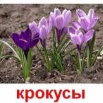 Растения. Садовые цветы 2