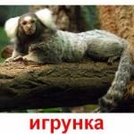 Животные приматы. Карточки Домана.