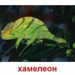 Животные. Пресмыкающиеся (черепахи и ящерицы) Карточки Домана.