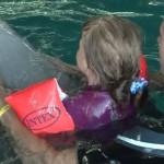Дельфинотерапия в дельфинарии «Немо».