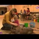 Канистерапия — игра с собакой по медицинской технологии.