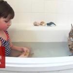 Как кошка помогла 5-летней девочке с аутизмом.